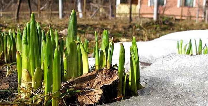 Что делать на даче в апреле? Список необходимых работ, чтобы не забыть