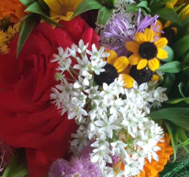 Джусай: вкусная зелень, красивые цветы