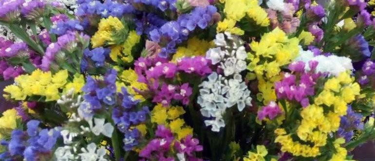 Если у вас еще нет этого цветка, обязательно посейте, вы не пожалеете