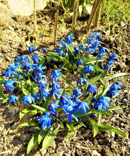 И всё-таки - весна и радость, солнце и цветы!