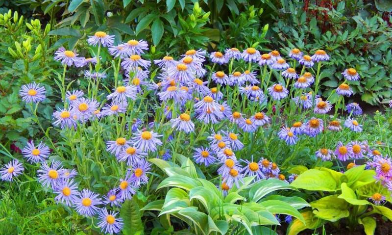 Интересные приёмы обустройства цветников с пионами.