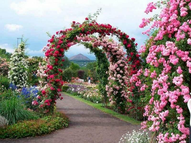 Из чего сделать садовую арку и какие вьющиеся растения у нее посадить? 🌿