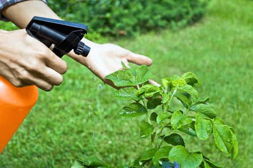 Как избавиться от муравьев на своем садовом участке