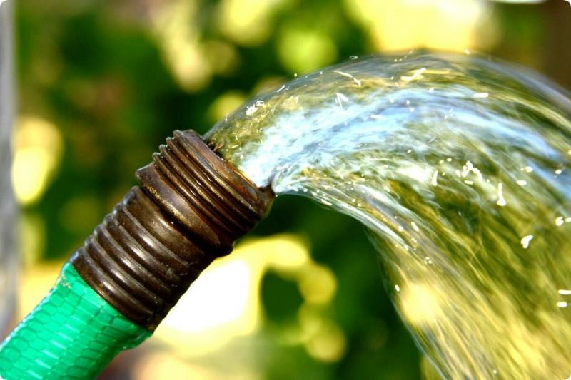 Как отыскать воду на участке – старый народный метод