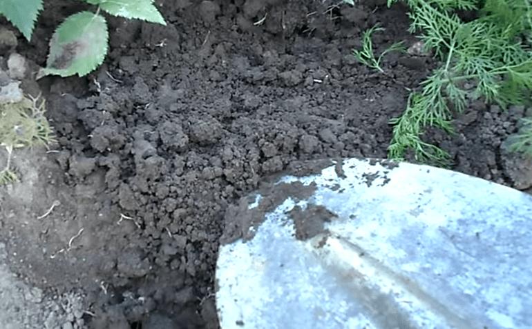 Как вытравить всех муравьев с вашего участка. Дешевый и действенный способ, которым может воспользоваться каждый