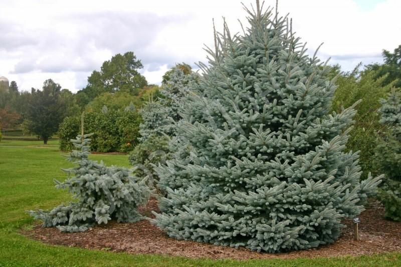 Какие деревья и кустарники полезно сажать возле частного дома 🌲🌳