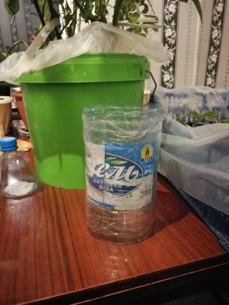 Когда и как сажать арбузы и дыни на рассаду: делаю спец-стаканы