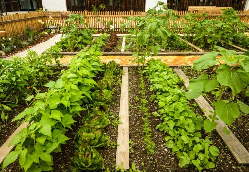 Красивые грядки своими руками: как украсить огород и вырастить хороший урожай