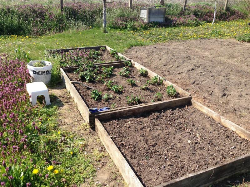 Мы открыли свой садово-огородный сезон. Как всегда, позже всех