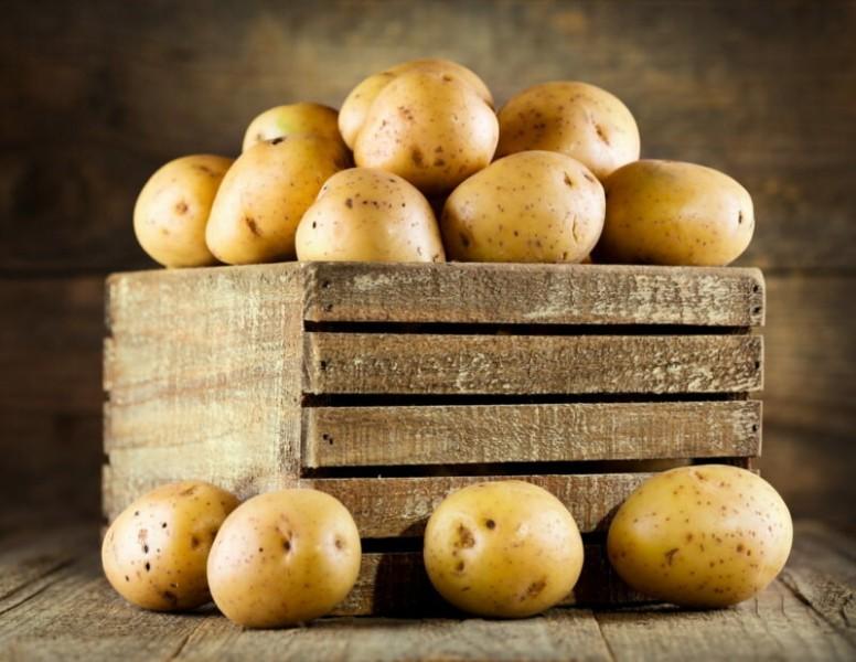 Невский — самый распространённый сорт картофеля в России