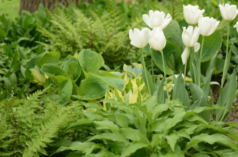 Очень красивый весенний сад