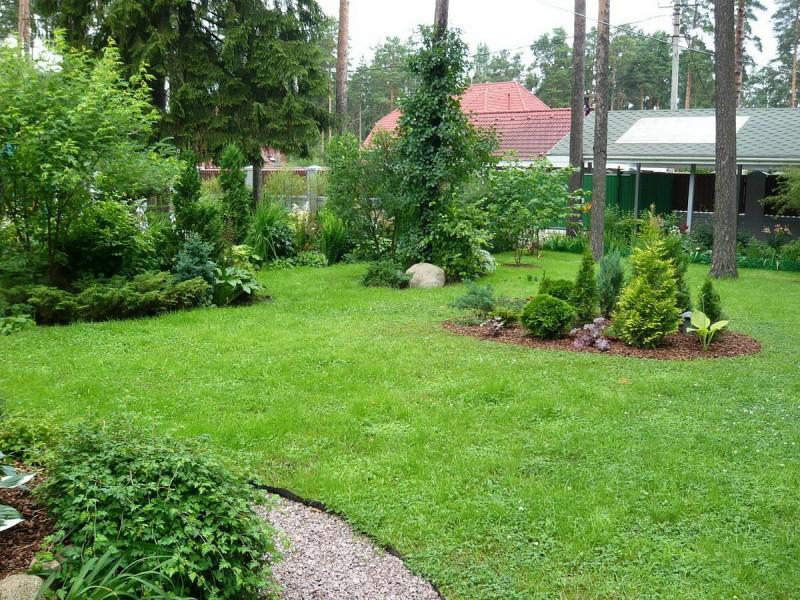 Почему не стоит делать газон на лесном участке, хотя это самое распространенное решение