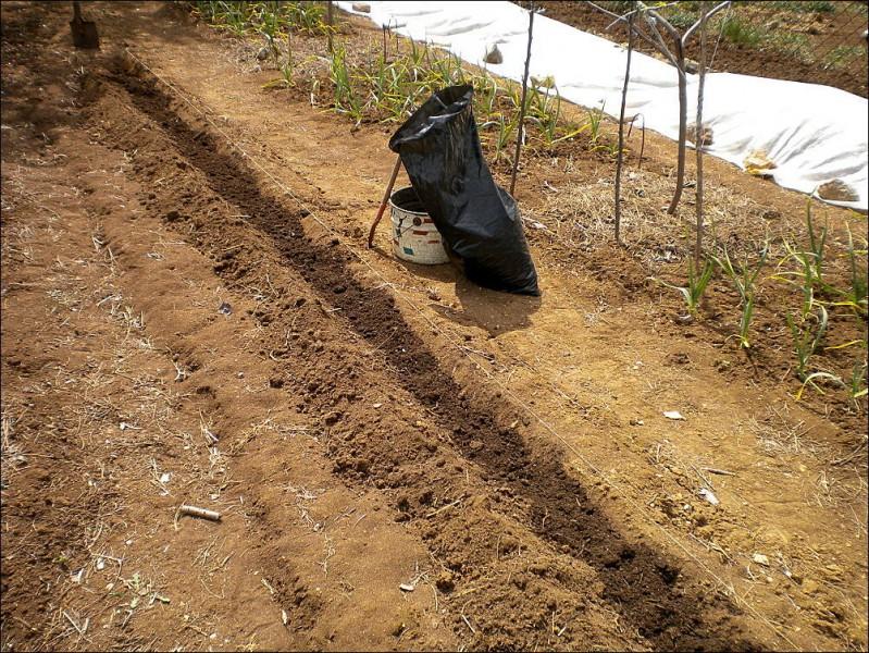 Посадил фасоль, тыкву и два персика