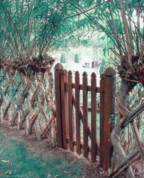 Сама природа построила мне забор. Абсолютно бесплатно, забрав всего лишь 1 день моей жизни.