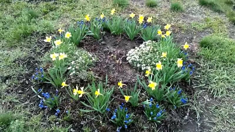 Советы цветоводам на апрель