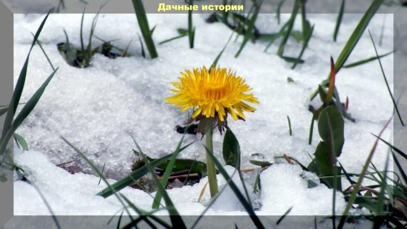 Спасаем растения в саду после заморозков. 2 эффективных рецепта обработки пострадавших растений