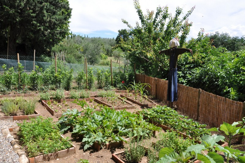Тайны опытного дачника. Маленькие хитрости, которые помогут на земельном участке и предохранят урожай от напасти вредителей
