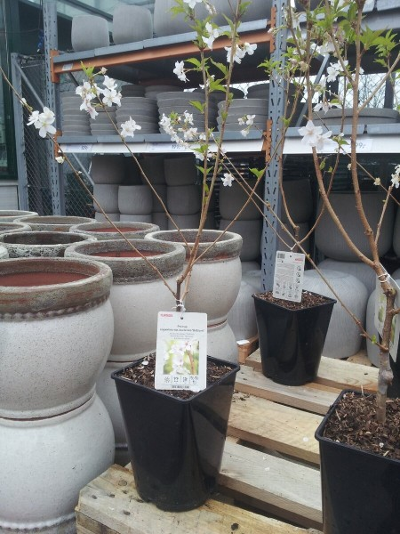 """В скандинавском магазине для садоводов """"Плантация."""" Часть 2. Теплицы. Цветы. Домики для насекомых. ФОТО"""