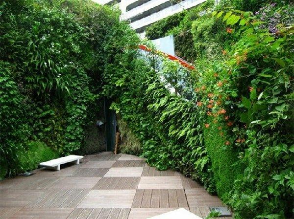 Вертикальное озеленение участка на даче или в саду: 3 вида и советы