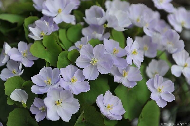 10 цветов апреля