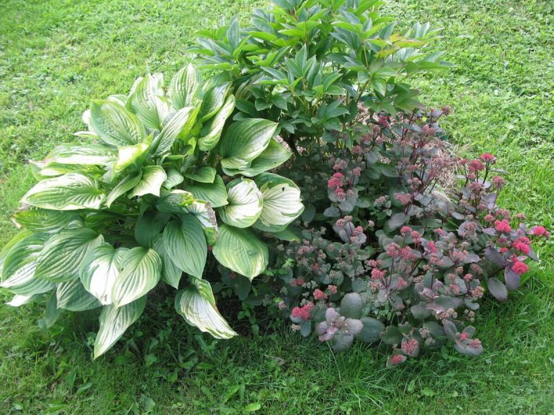 3 приёма, которые помогут сделать Хосту еще красивее летом
