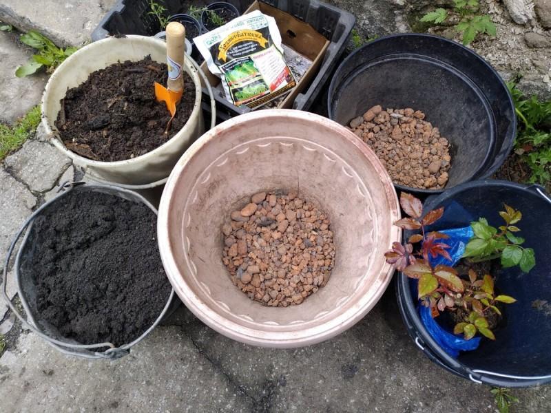 Хроники огородика 2020. Цветет сирень, посадила новые розы в горшки