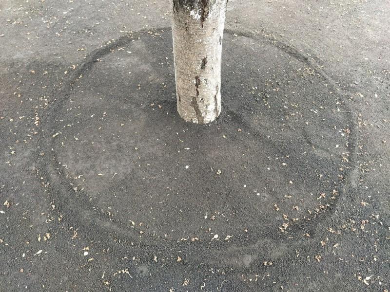 Из каких многолетников создать клумбу под деревом, плюсы и минусы