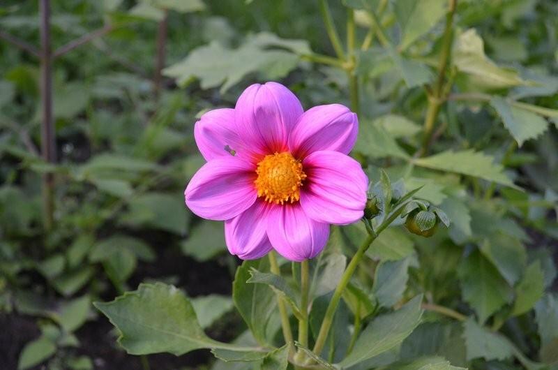 Какие цветы можно сеять семенами в мае. Выращиваем прекрасную клумбу без рассады