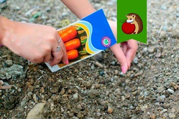 Когда посадить морковь в мае? Выбираем идеальные для этого дни