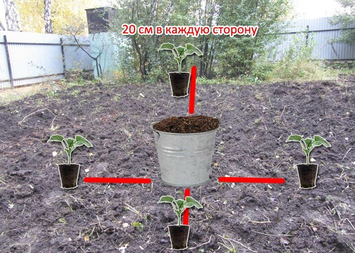 Ни тёплая грядка, ни выращивание огурцов в бочке, ни шпалера - ни что не даст такой урожай огурцов, как мой метод. Делюсь опытом