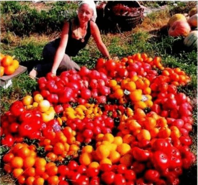 Овощное трио. Не представляем своей жизни без свежих овощей прямо с грядки