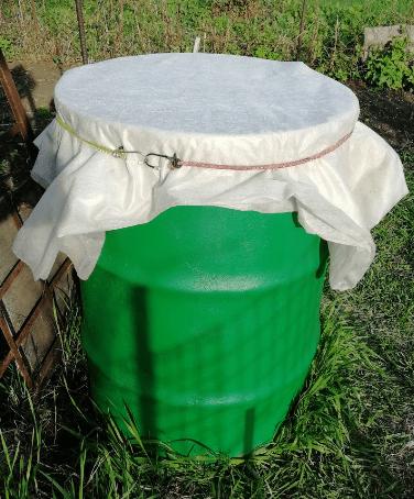 Посеяла в бочку капусту на рассаду и фасоль (3 мая)