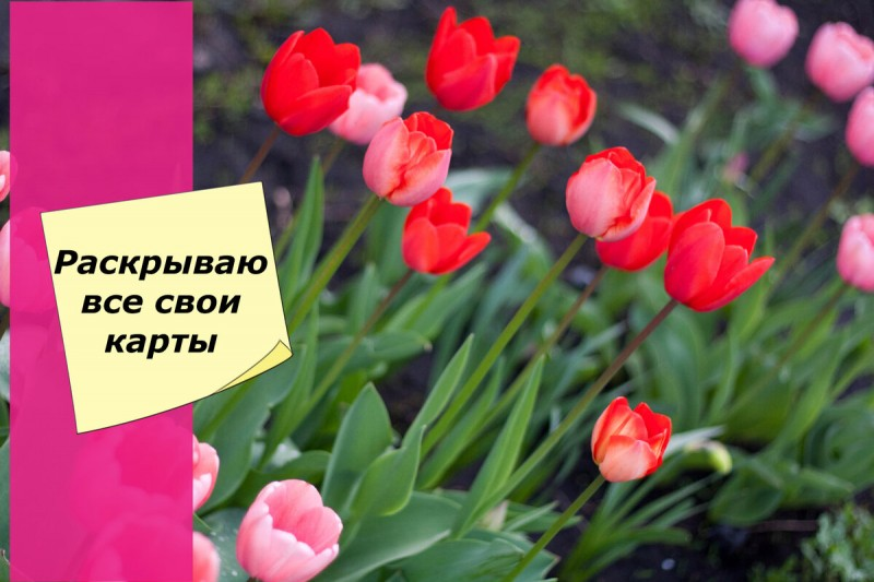 Тюльпаны не цветут? Расскажу, как заставить