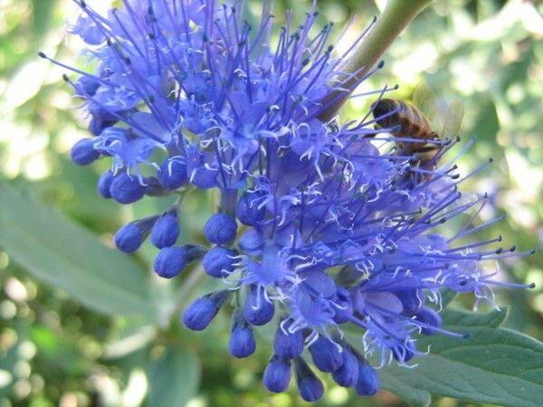 Топ 5 редких, но красивых многолетних Цветов, цветущих всё лето в Саду
