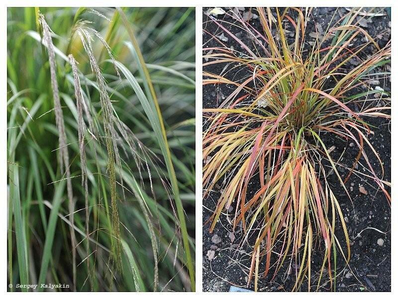 5 растений, которые я отправил за забор
