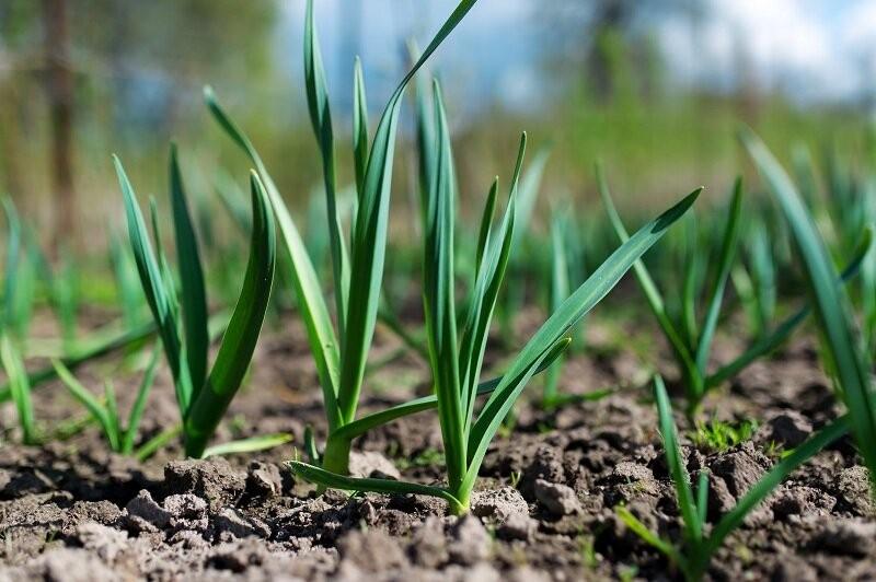 5 растений, которые можно посадить под зиму