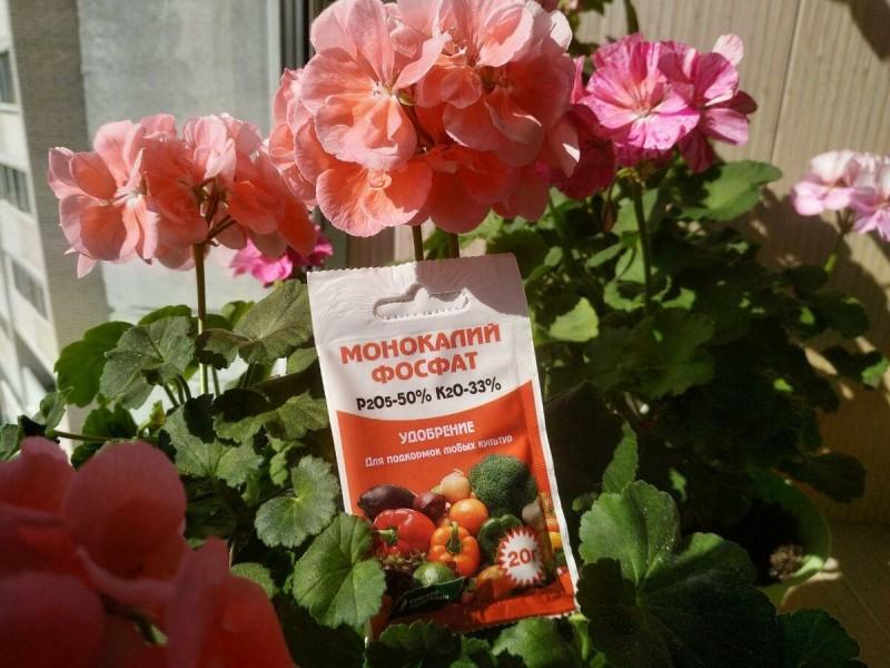 Я нашла идеальные подкормки для гераней. Теперь мои цветы цветут долго и пышно