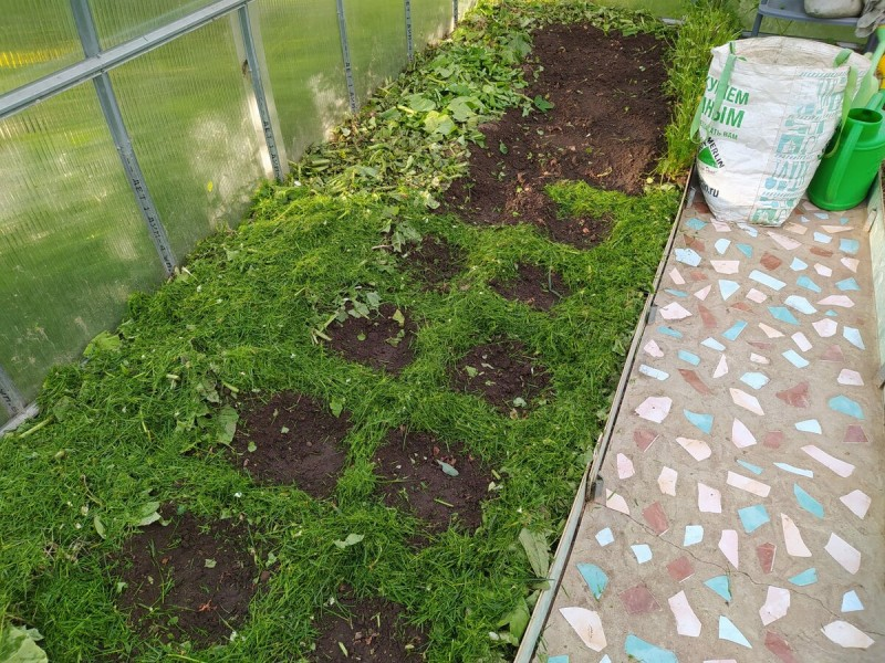 Как красиво я посадила вторую партию огурцов в теплицу, без рассады