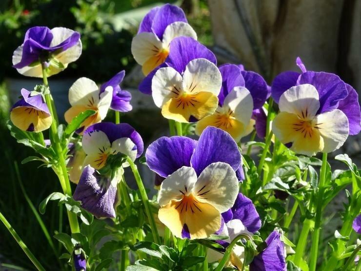 Какие цветы и овощи посеять в июне в открытый грунт