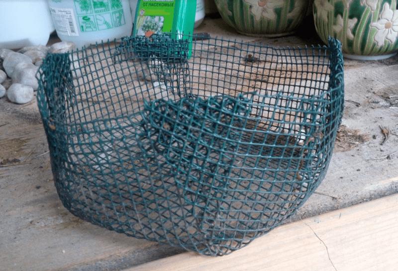 Луковичные в сетках в моем саду: за и против