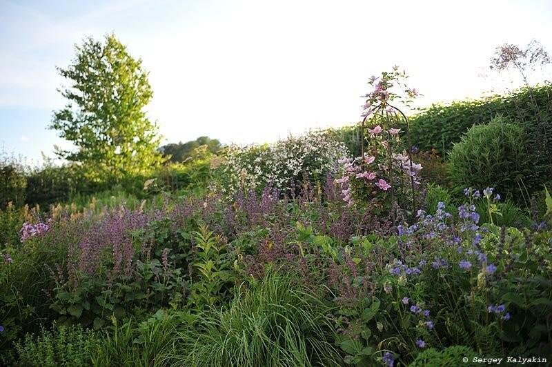 Мой сад в середине июня: зацвели флоксы, а розы на пике