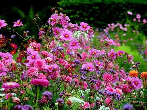 Почему в цветнике не обойтись без однолетних растений