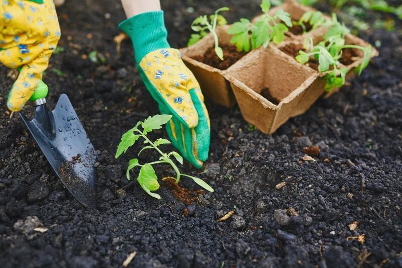 Подкормка помидоров в теплице: какие удобрения и когда использовать
