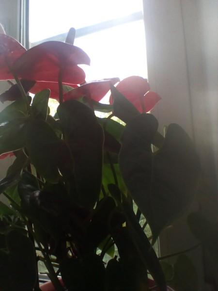 Поливала цветок перекисью водорода. Показываю что из этого вышло
