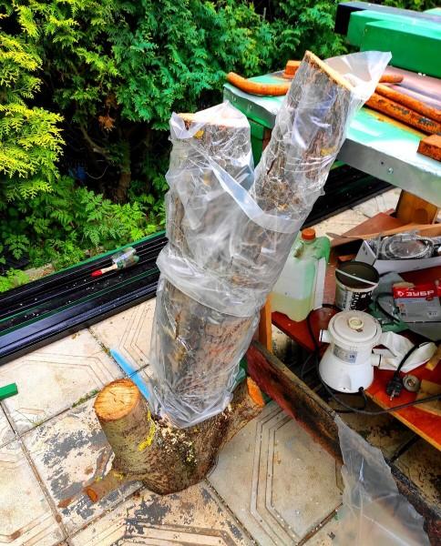 Посадил грибы на даче