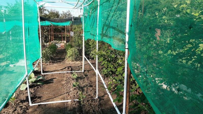 Правильная посадка огурцов и дальнейшая формировка - залог хорошего урожая.