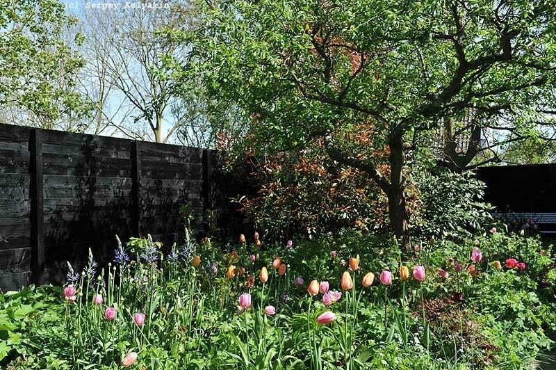 Сад на берегу Северного моря: летом - розы, весной - тюльпаны