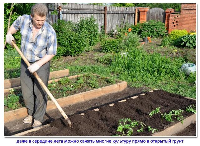 Сосед в конце июня готовит новые грядки: спросил у него, что он собирается сажать в середине лета и вырастет ли урожай до осени