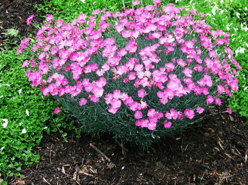 Топ 4 лучших растения для альпийской горки. Ваш сад и огород будет лучшим среди соседей
