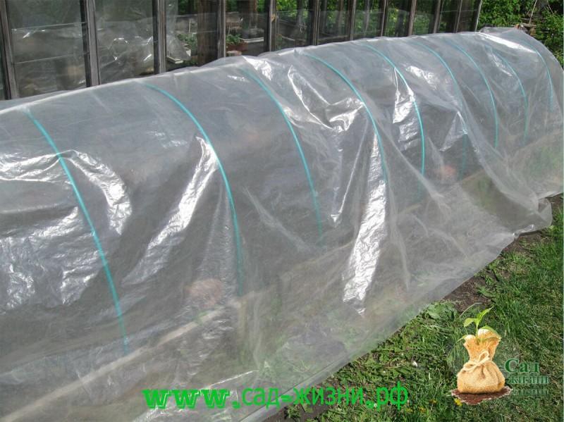 Высаживаем рассаду перца в парник, а не в теплицу, чтобы получить большой урожай